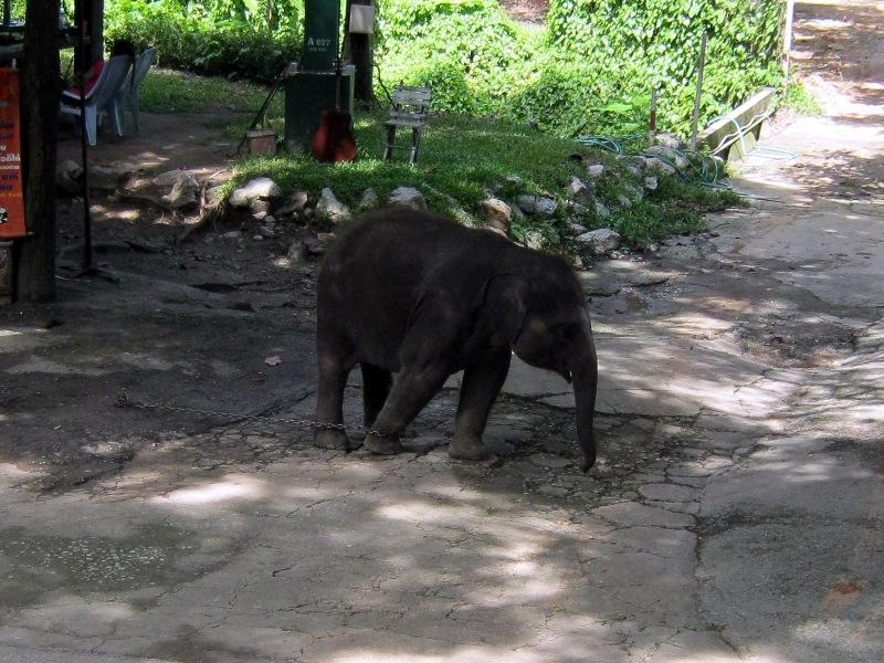 Бедный слоненок