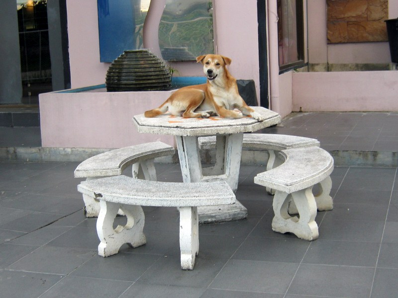 Собака на столе лежака (ЧМ)