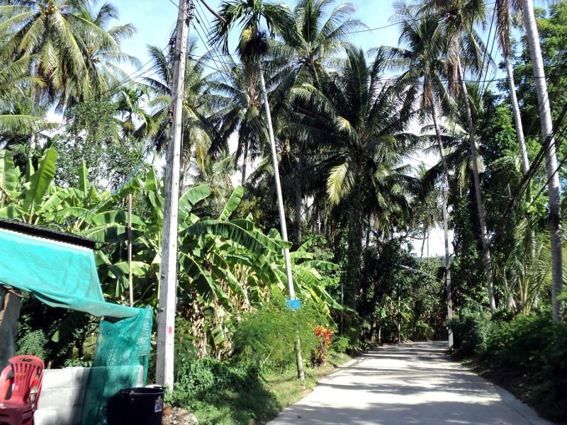 Дорога вглубь острова