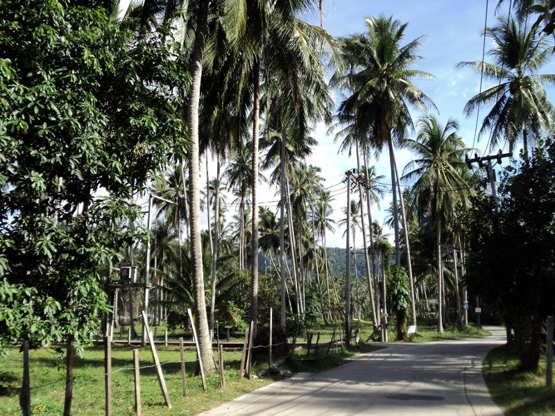 Пальмы, пальмы повсюду!