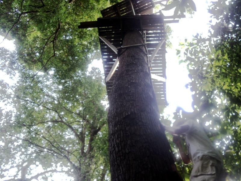 Надстройка на дереве