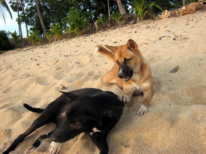 Дружелюбные собаки - они повсюду