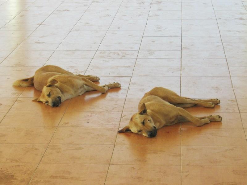 Собаки на полу лежаки