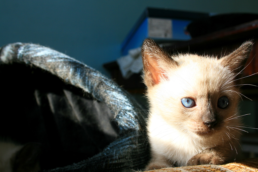 Котятко